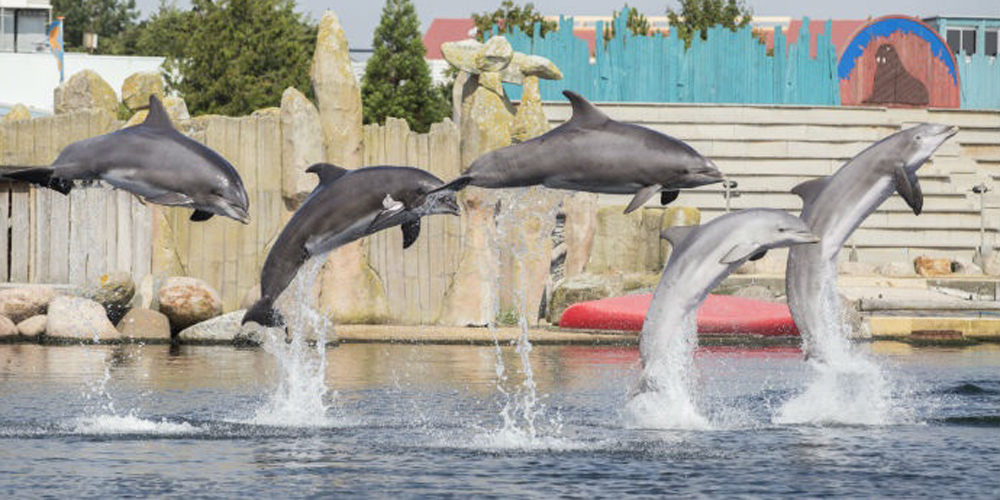 vijf springende dolfijnen